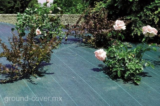 Ground cover protegiendo de mala hierba a plantaciones de rosas